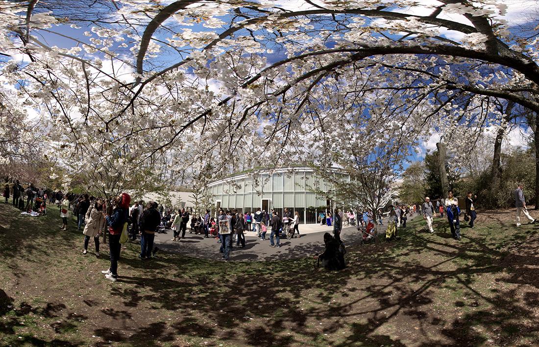 Brooklyn Botanic Garden Cherry Blossom Festival 2014